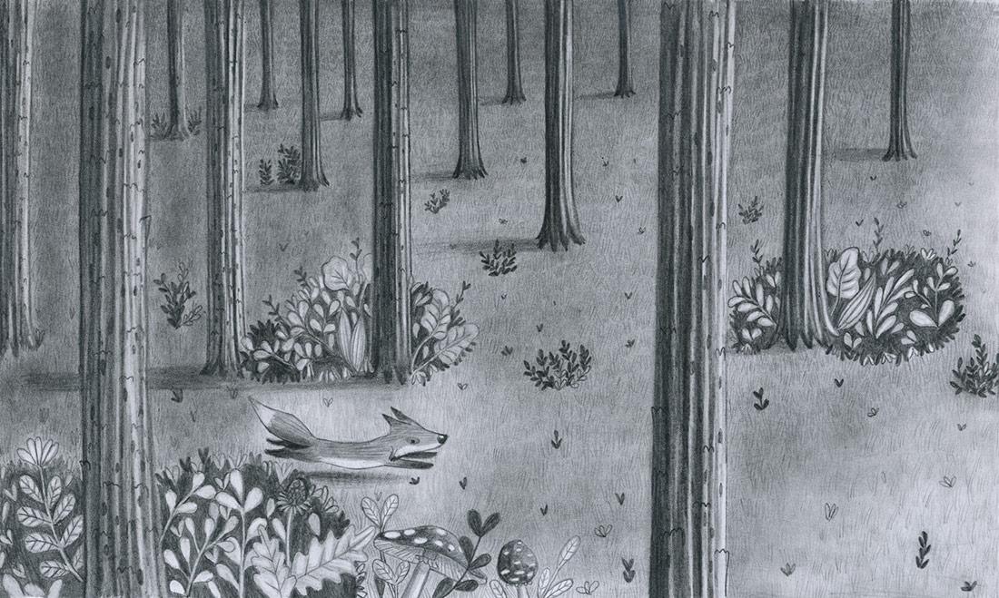 Illustrazione-Volpe-Grafite-LeonoraCamusso