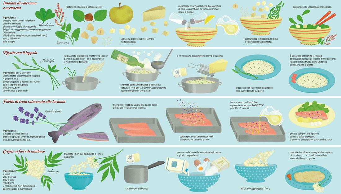 Infografica-Erbe-Spontanee-Cucina-LeonoraCamusso